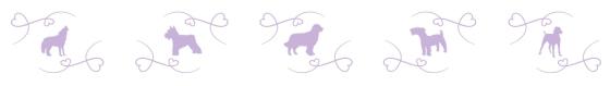 banniere-chiens-serenite-canine